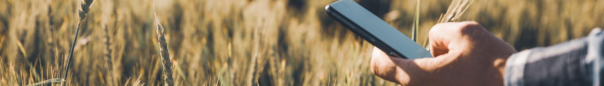 telefon w ręku